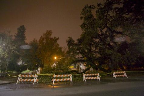 A tree falls on SRJC campus