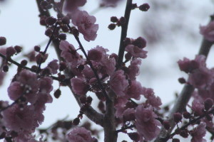 Early Spring Changes Climate Debate
