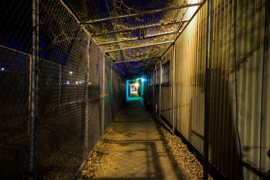 Ordinary spaces such as a walkway on the SRJC campus could be dangerous to women at night.