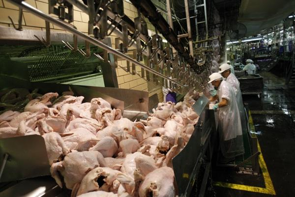 High volume turkey production causes serious repetitive stress injury to line workers.