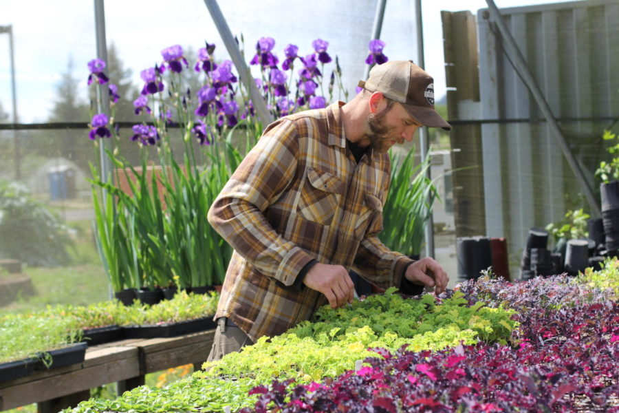 SRJC's student enterprise projects give students the opportunity to learn hands on how to grow, market and distribute an agriculture product of their choosing. Cash crops like lettuce are grown on the farm.