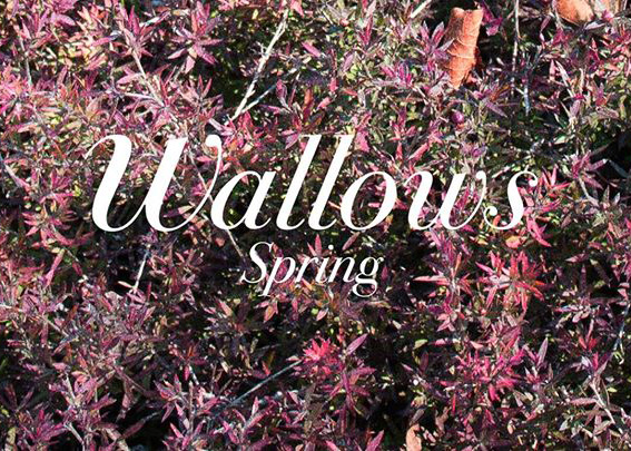 The Wallows' 'Spring: EP' mixes teenage angst and nostalgia