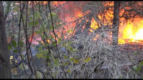 """SRJC-TV: """"The Oak Leaf On-Line"""" after the Kincade Fires"""