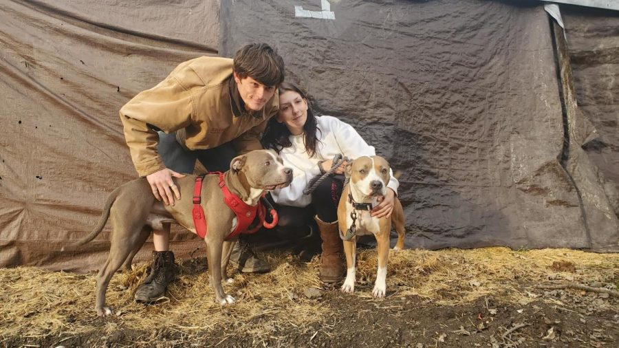 Zayin and Aurora, thought to be the youngest campers on the Joe Rodota Trail, sit outside their tent with their pitbulls Hitty and Fawn while fellow residents check on the couple, thought to be the youngest on the trail.