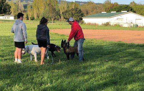 Dog owners meet at Prince Park and flout the county's social distancing requirements which mandate people from different households stand at least six feet apart from one another.