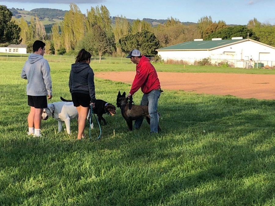 Dog owners meet at Prince Park and flout the countys social distancing requirements which mandate people from different households stand at least six feet apart from one another.