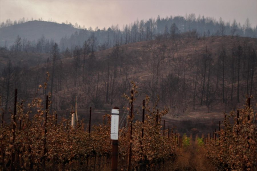 The burnt grapevines in the foreground give the destroyed timber forest in the background a distinctly Sonoma-fire feel.