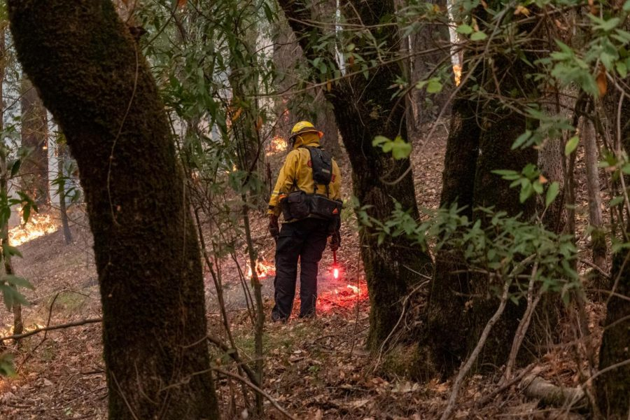 A Cal Fire crew strategically places his flare to complete a controlled burn Monday evening on Saint Helena Road in east Santa Rosa.