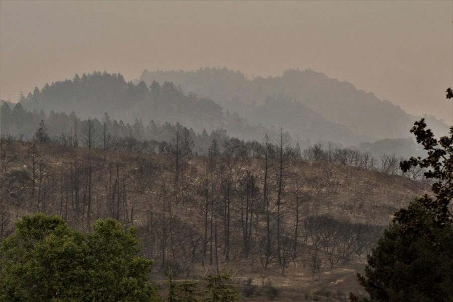 A heavily timbered hillside is completely burnt from the Glass Fire.