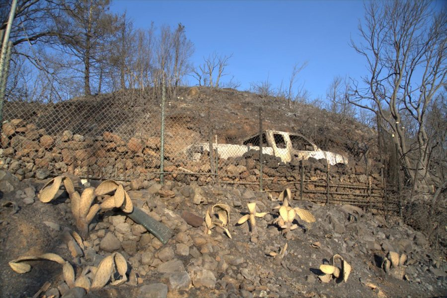 Shriveled cactus and destroyed truck on Los Alamos Road after Glass Fire