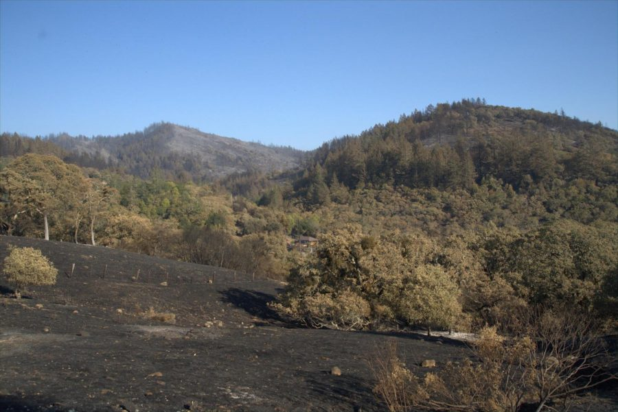 The Glass Fire burned in a mosaic pattern along the hills around Los Alamos Road