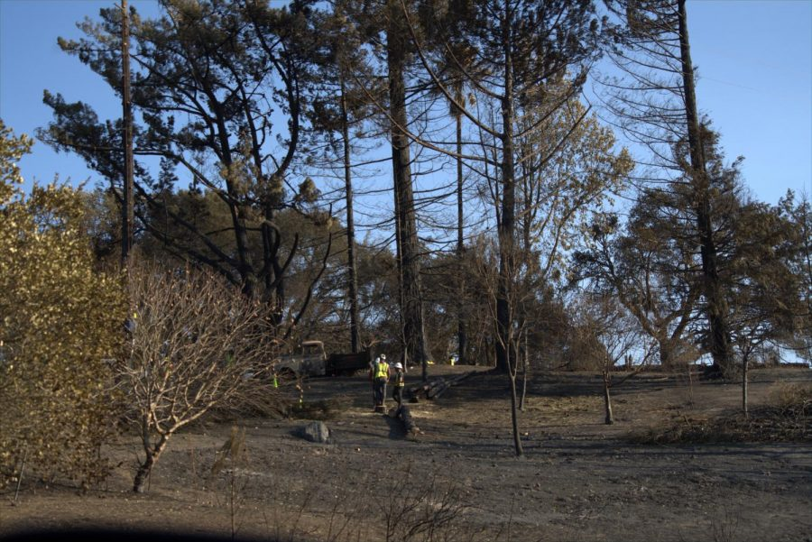 Workers are cutting down dead trees after Glass Fire devastation