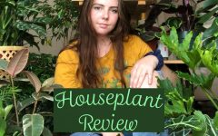 Navigation to Story: Houseplants for beginners