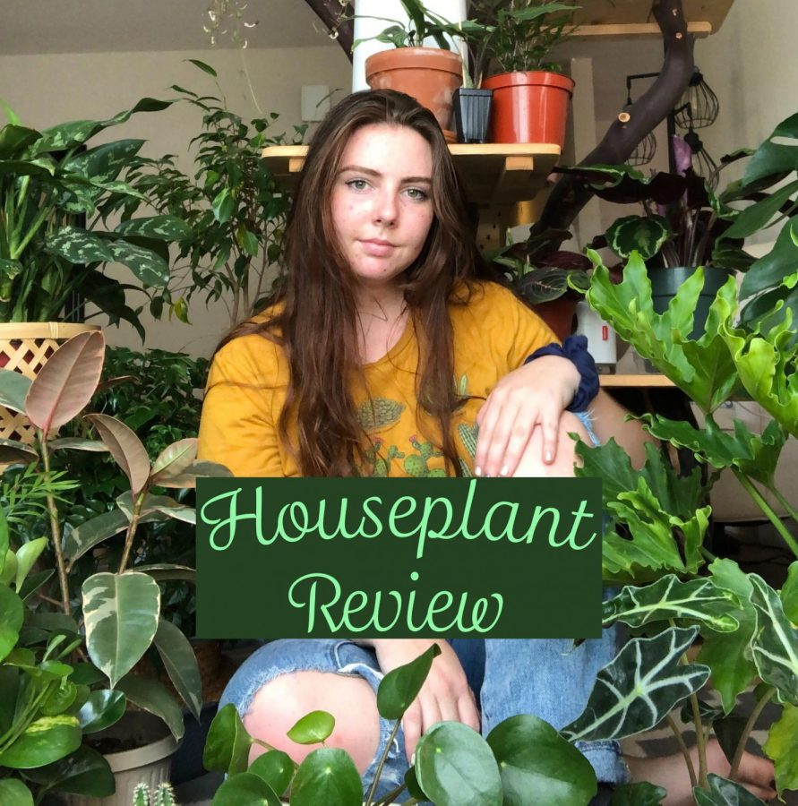 A girl in a yellow shirt and jeans sits surrounded by houseplants.