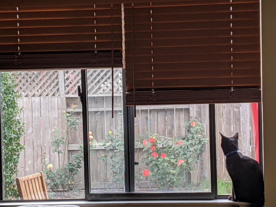 A photo of a black cat seated in a windowsill.