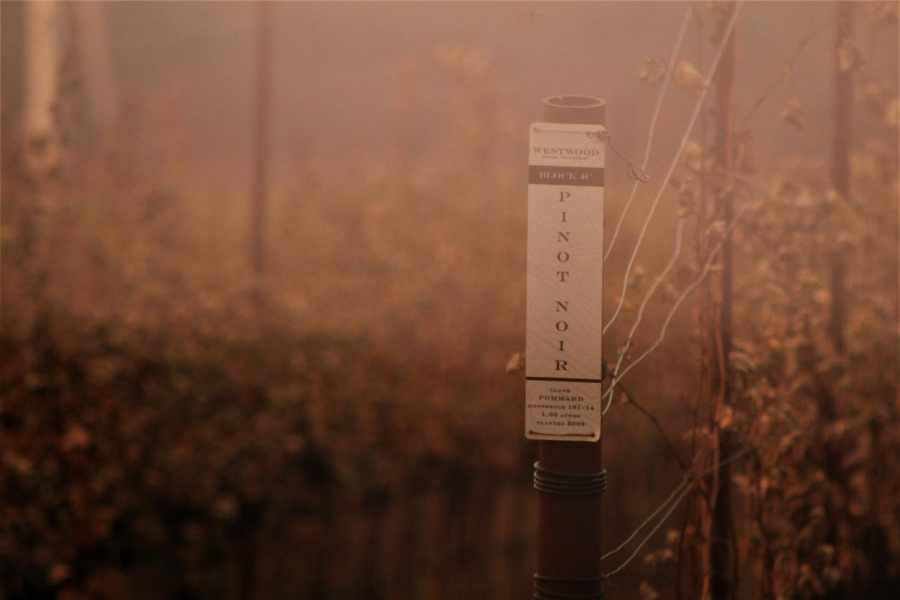 A smokey picture in the vineyards with a small sign that says Pinot Noir
