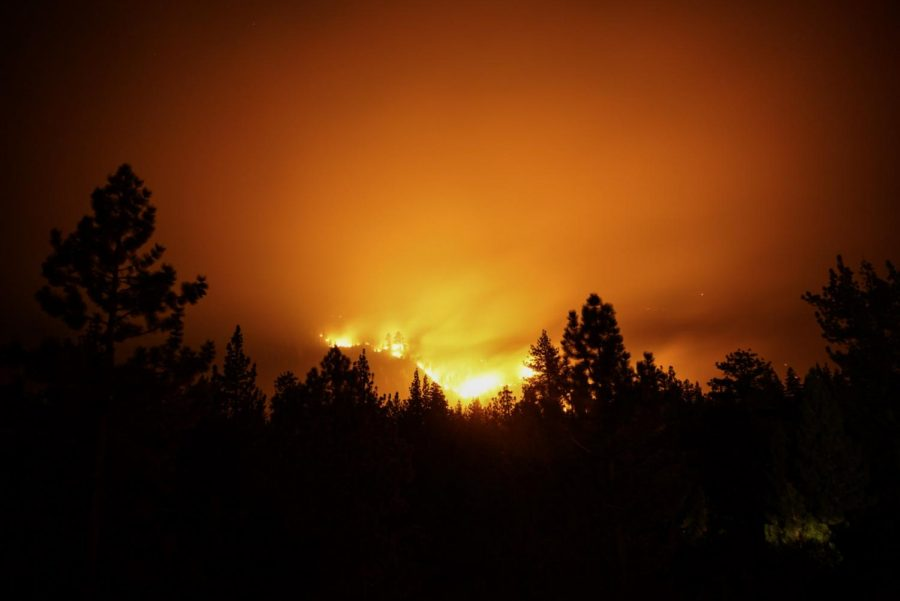 A picture of a dark skyline of trees with the orange glow of the Caldor Fire coming from behind the trees.